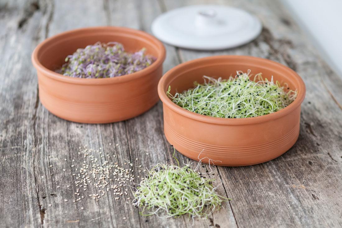 Graupera foto germilife amb germinats